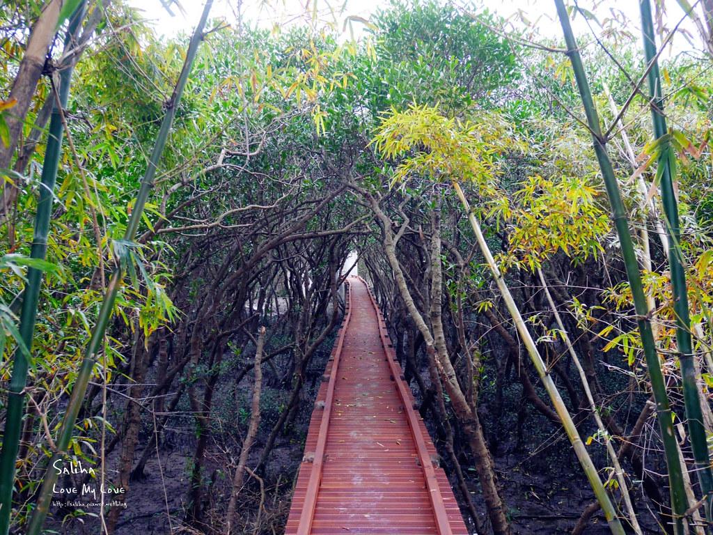 淡水紅樹林站一日遊景點踏青推薦淡海輕軌紅樹林生態步道好走輕鬆唯美 (7)