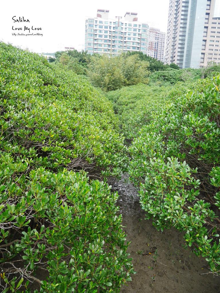 淡水紅樹林站一日遊景點踏青推薦淡海輕軌紅樹林生態步道好走輕鬆唯美 (5)