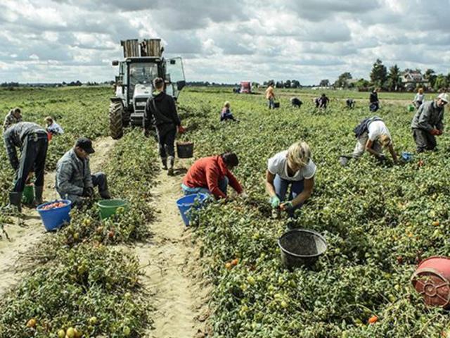 lavoro agricolo