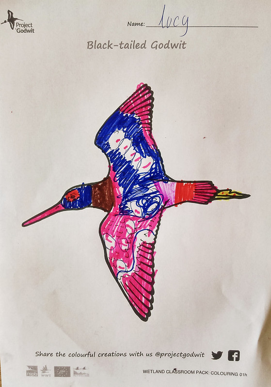 Godwit by Lucy, submitted by Clare Best (email)