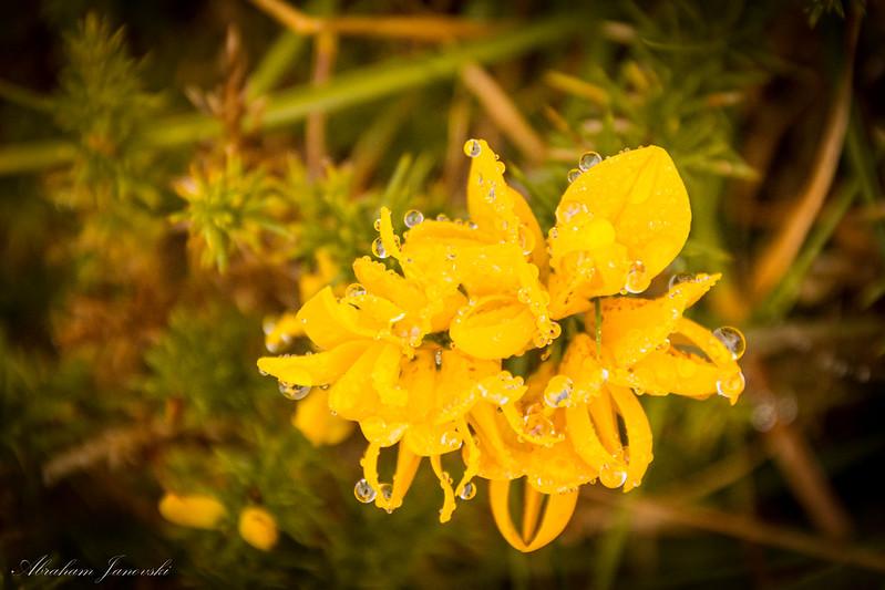 Gotas en la flor