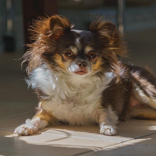 Lucille prend un bain de soleil