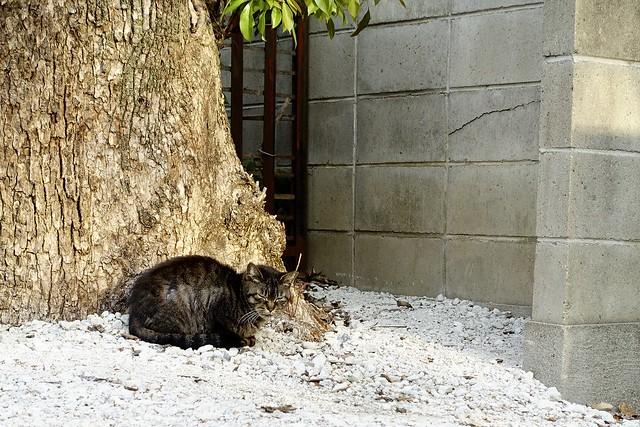 Today's Cat@2020ー04ー15
