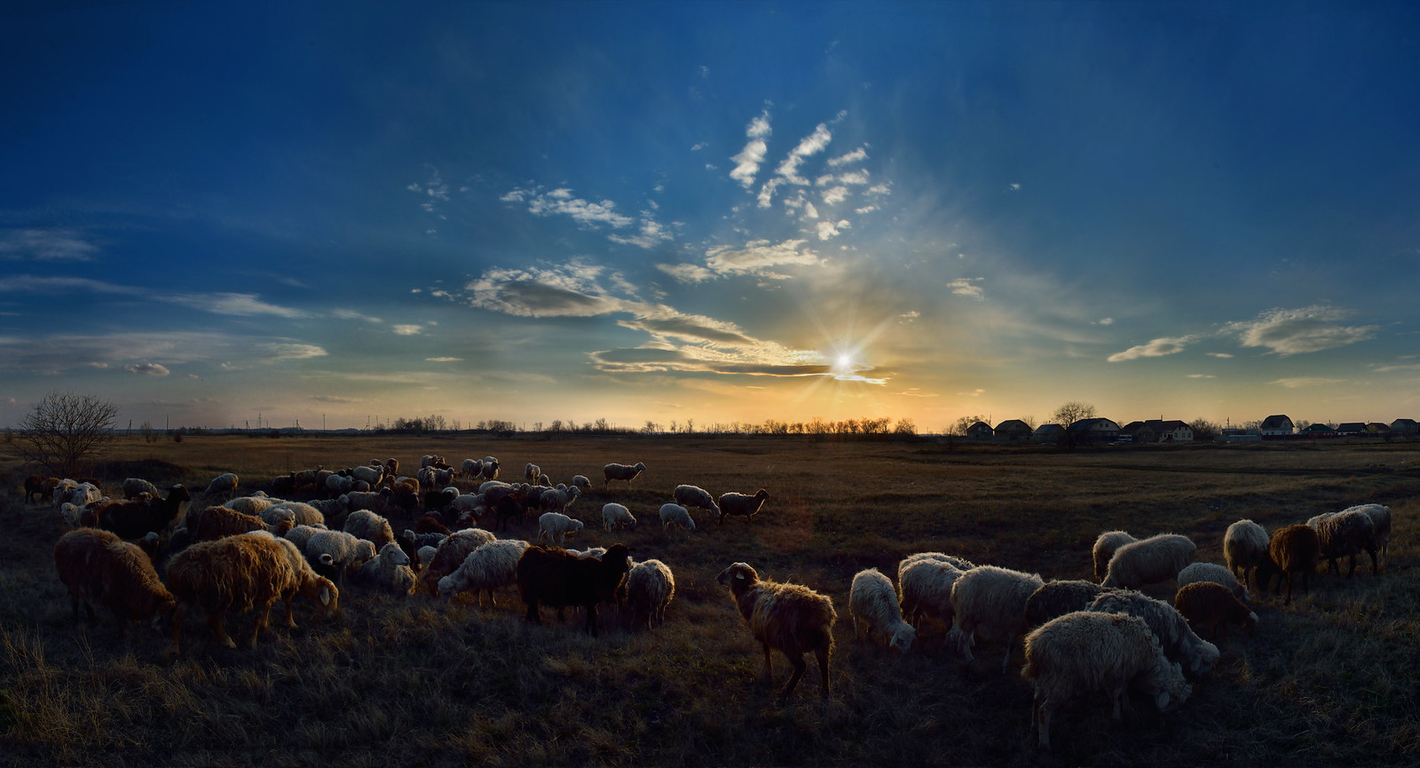 Овцы, закат, фотограф Челябинск