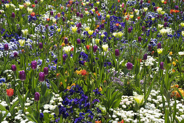Frühlings Blüten