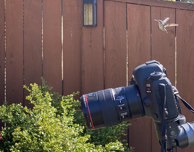 Hummingbird on scene