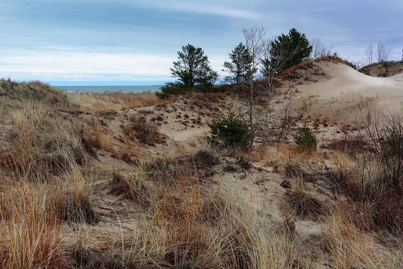 Rugged Dune