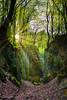 Mystic Forest - Fuji X100v