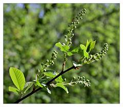 (Lente)groen_TNS0015
