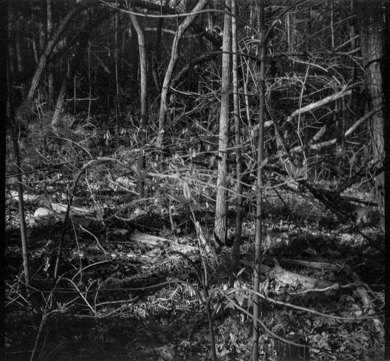 deep in the forest, late light II, Richmond Hill Park, Asheville, NC, Bencini Koroll, Ilford FP4+, Moersch Eco Film Developer, mid April 2020