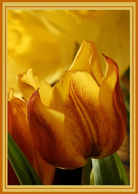 Tulips - March 2020 (2)