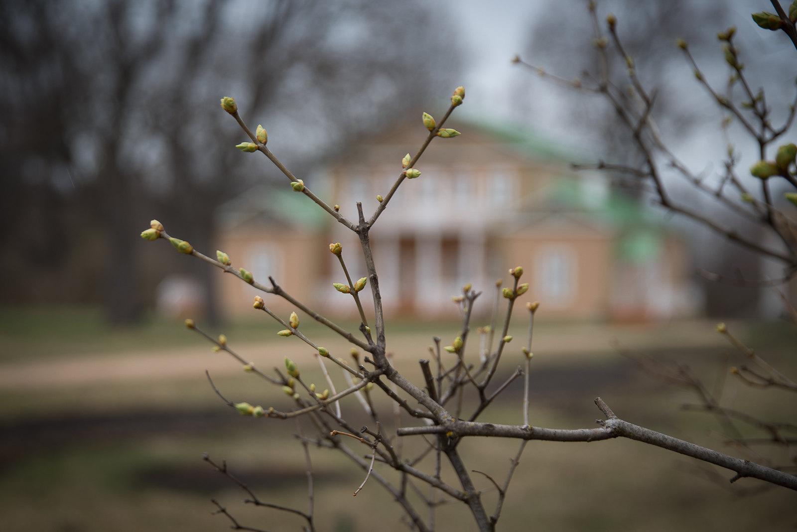 Лермонтовские «Тарханы». Апрельские дни. Фотограф: Семёнов Александр