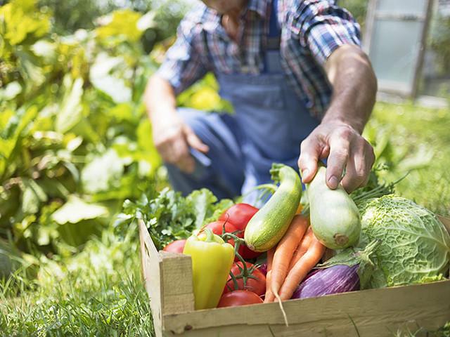 lavori hobbistici terreni agricoli