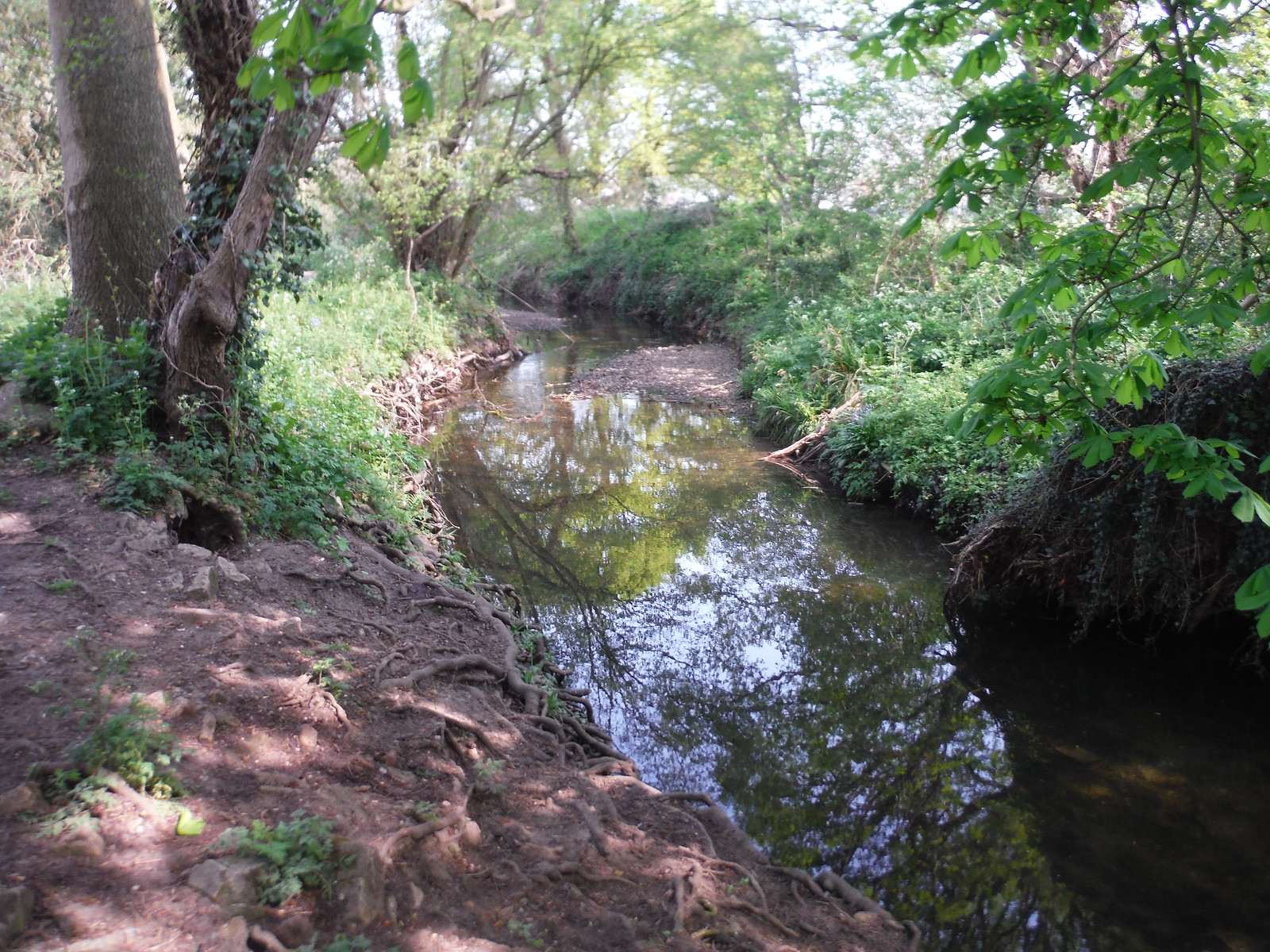 The Ravensbourne River SWC Short Walk 46 - Beckenham Place Park (Ravensbourne to Beckenham Hill)