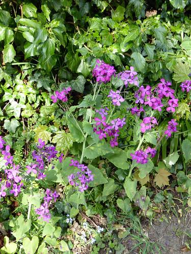 Unidentified Flower