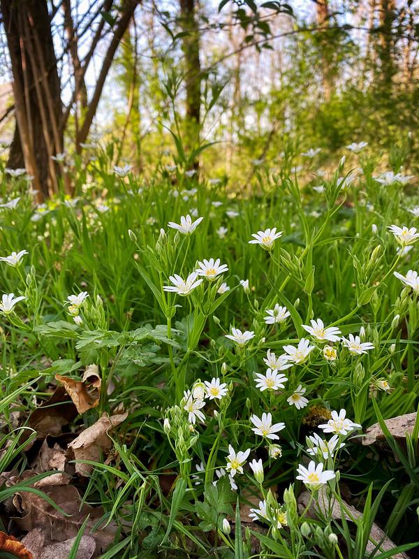 April in Stein