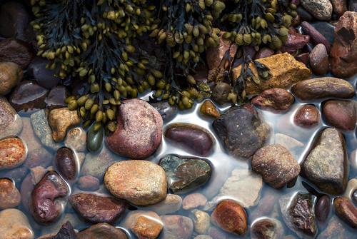 beach channelislands green landscape saintmartin water archirondel jersey