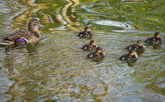 The ducklings have arrived! 😍