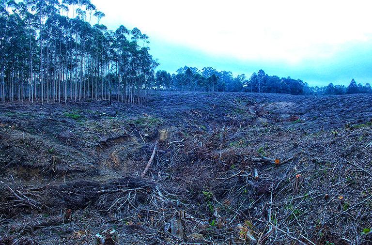 西哈波拉族聲稱這是祖先留下來的林地之一。這塊林地被紙漿公司PT TPL剷平,作為桉樹人工林用地。圖片來源:Ayat S. Karokaro(Mongabay Indonesia)