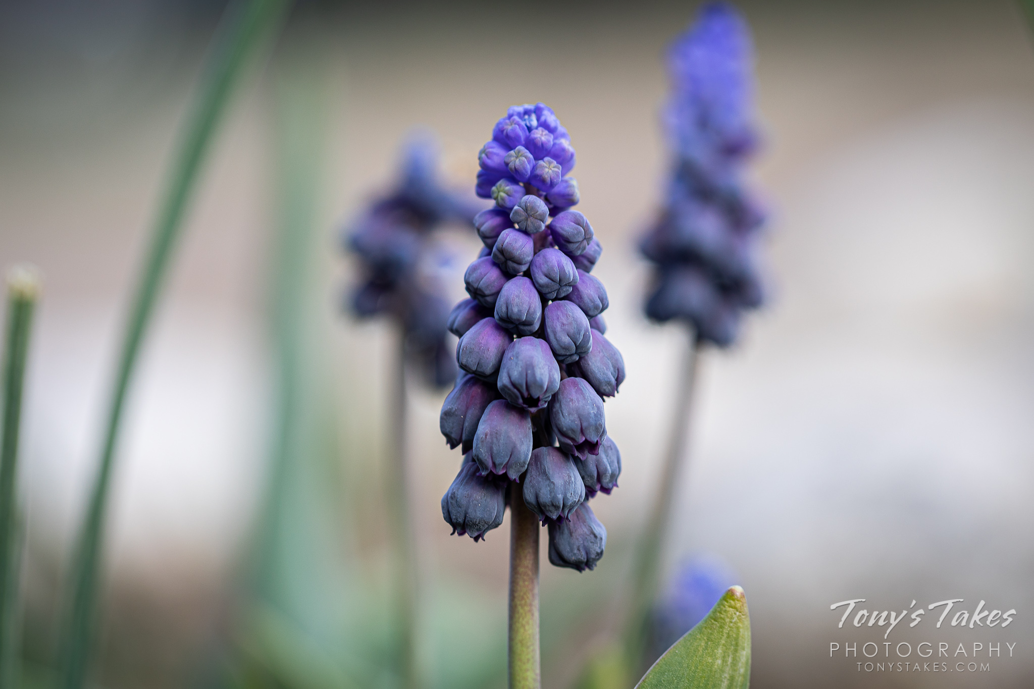 Closeup of some spring flowers in Colorado. (© Tony's Takes)