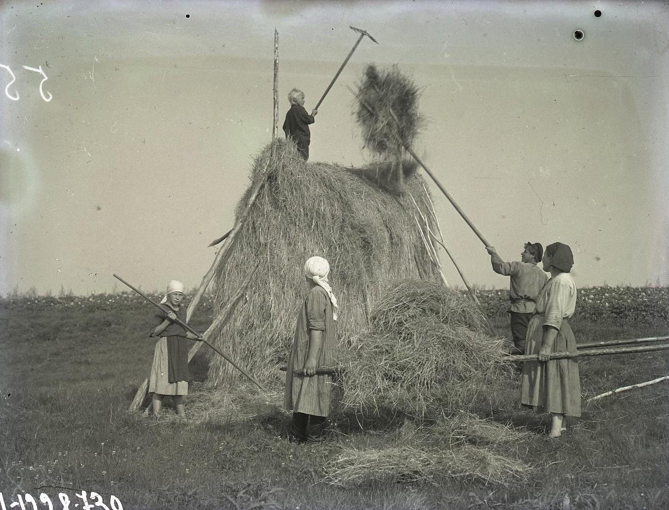 Укладывание сена в стог