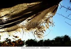 Life after #coronavirus #COVID-19. Old #dirty torn rag pierced by the sun at sunset end blue sky. - @goshashka_com