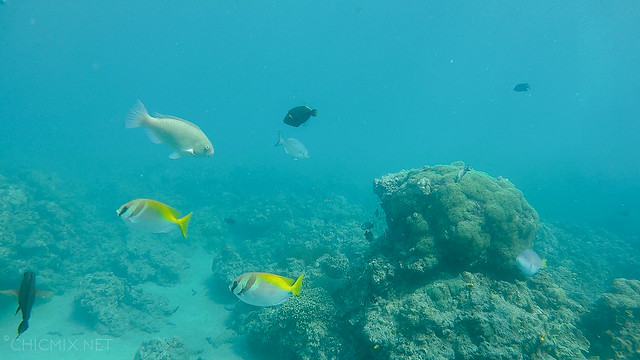 Summer Cruise and Diving batangas Chic Mix