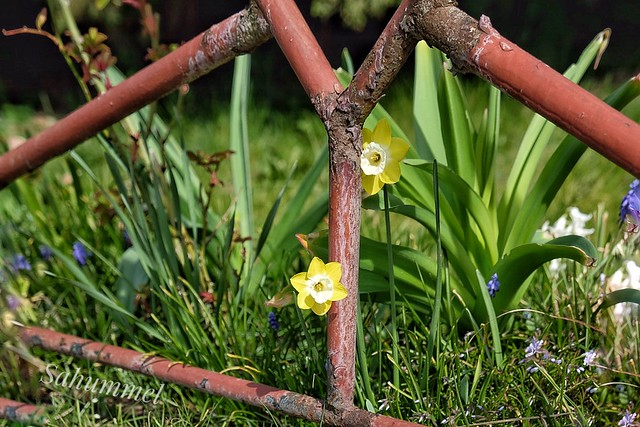 Happy Fence Friday - guckmal ...... Zaunblümchen