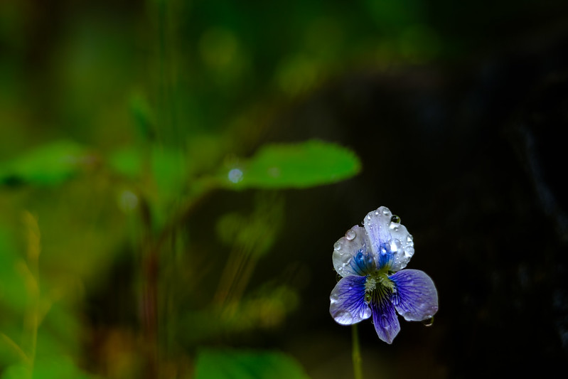 A small flower in the garden.