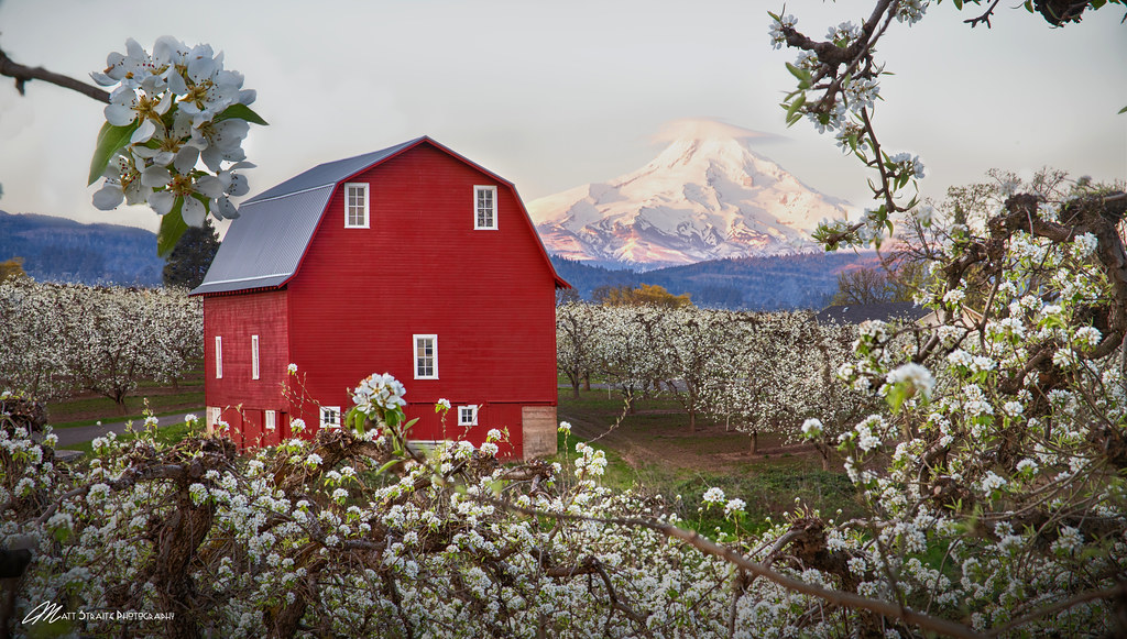Red Barn and Mt. Hood