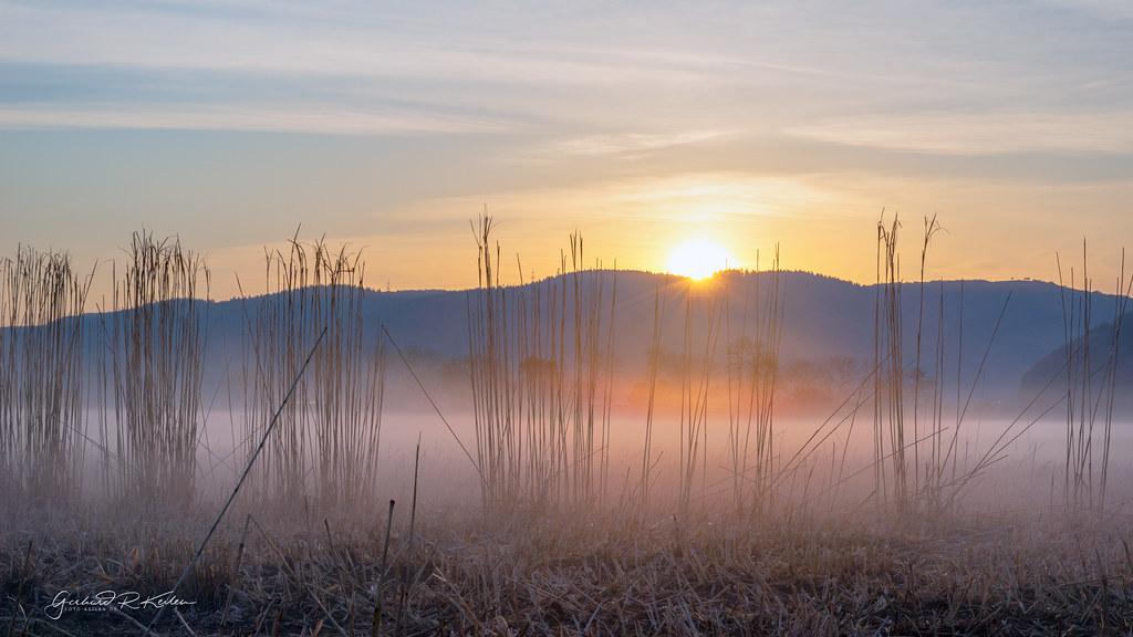 Foggy sunrise in the Moselle valley!