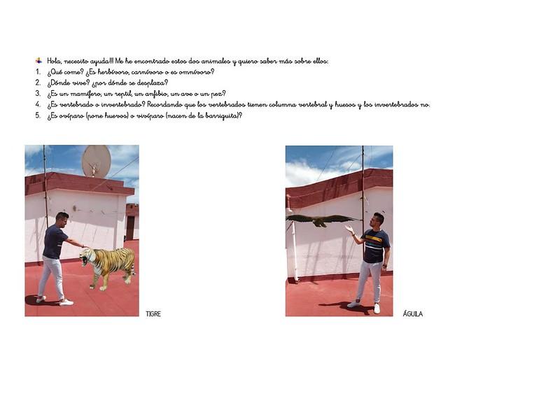 tigre y águila pdf_page-0001