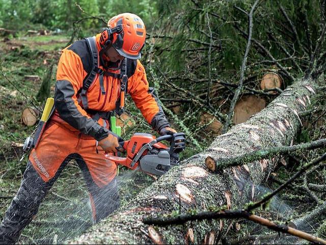 silvicoltura e manutenzione verde