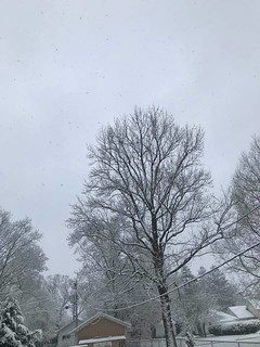 Photo #1 - Snow On the Trees - Friday April 17, 2020