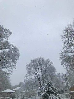 Photo #4 - Snow on the Bigger Trees in my Back Yard - Friday April 17, 2020jpg