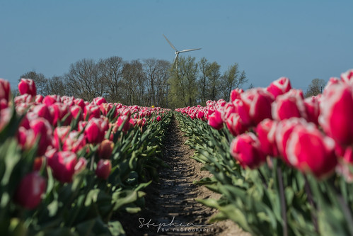 Straight in Lane - Netjes op een rij | by Stef32Photo