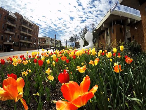 Springtime in Blacksburg