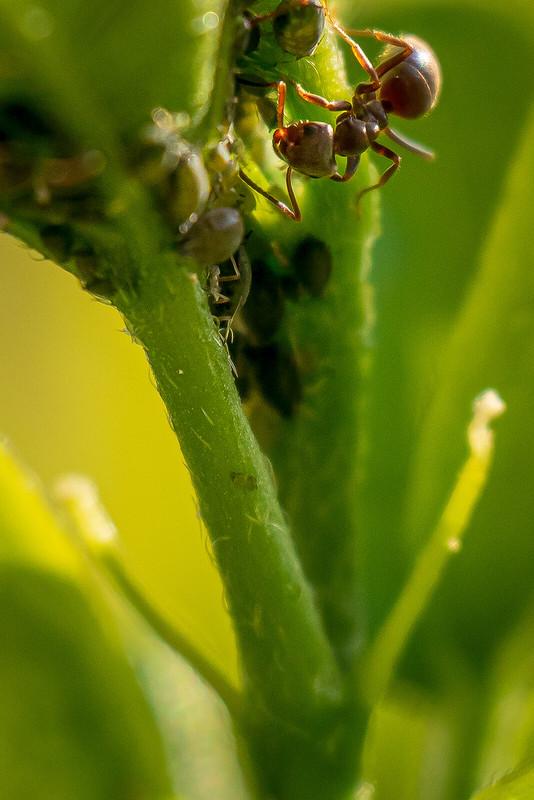 Le banquet des fourmis + ajouts 49785980006_ce04a1e7bd_c