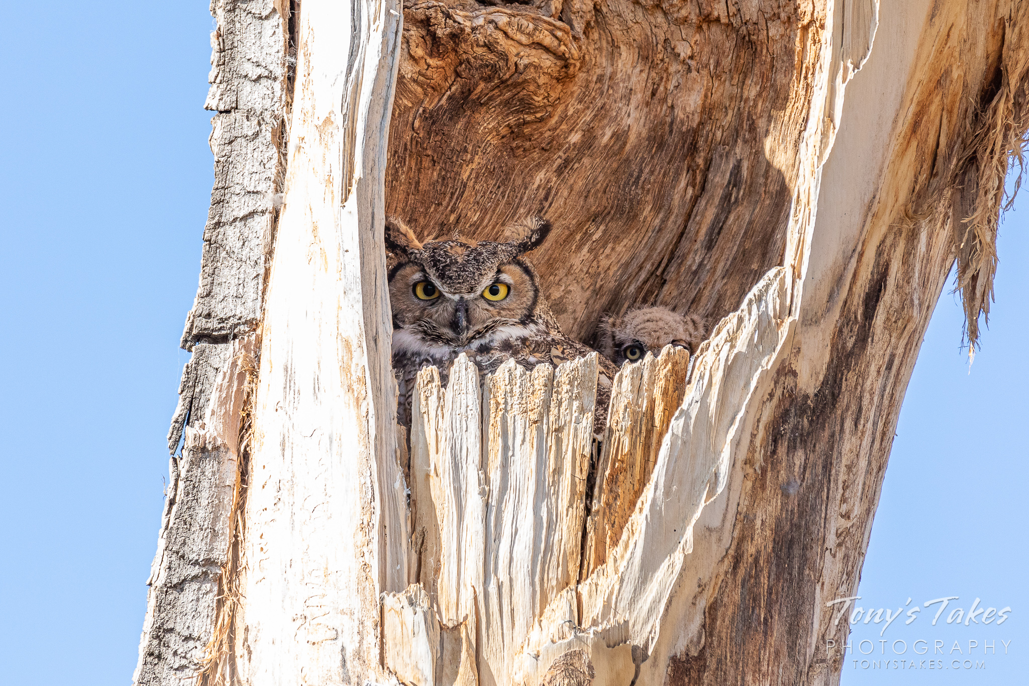 First owlets of the season