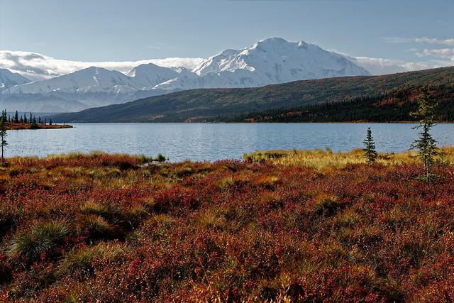 Real Denali National Park!