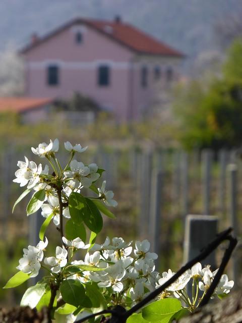Valleggia in primavera
