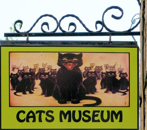 kotor monténégro chats catsmuseum muséeduchat enseigne