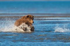 Follow That Splash