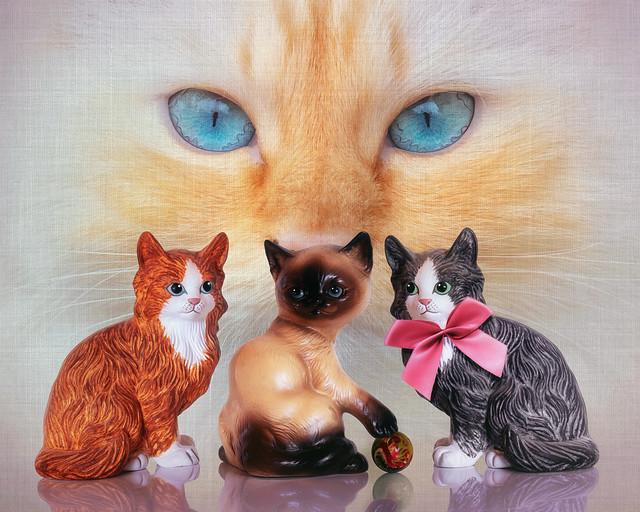 Aristocats - The next generation