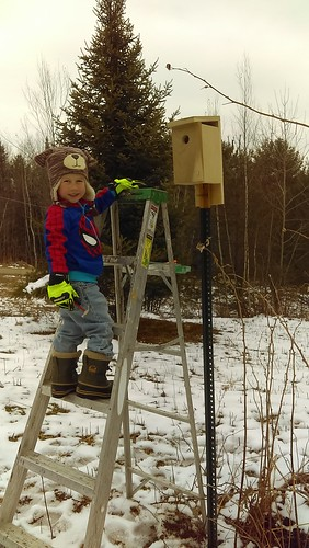 putting out nest box