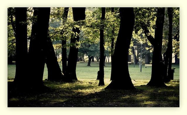 Park miejski - Pieszyce.