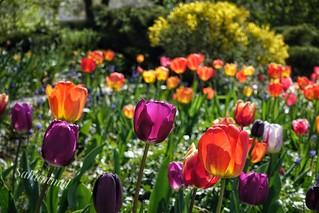 Frühling auf dem Bundesplatz