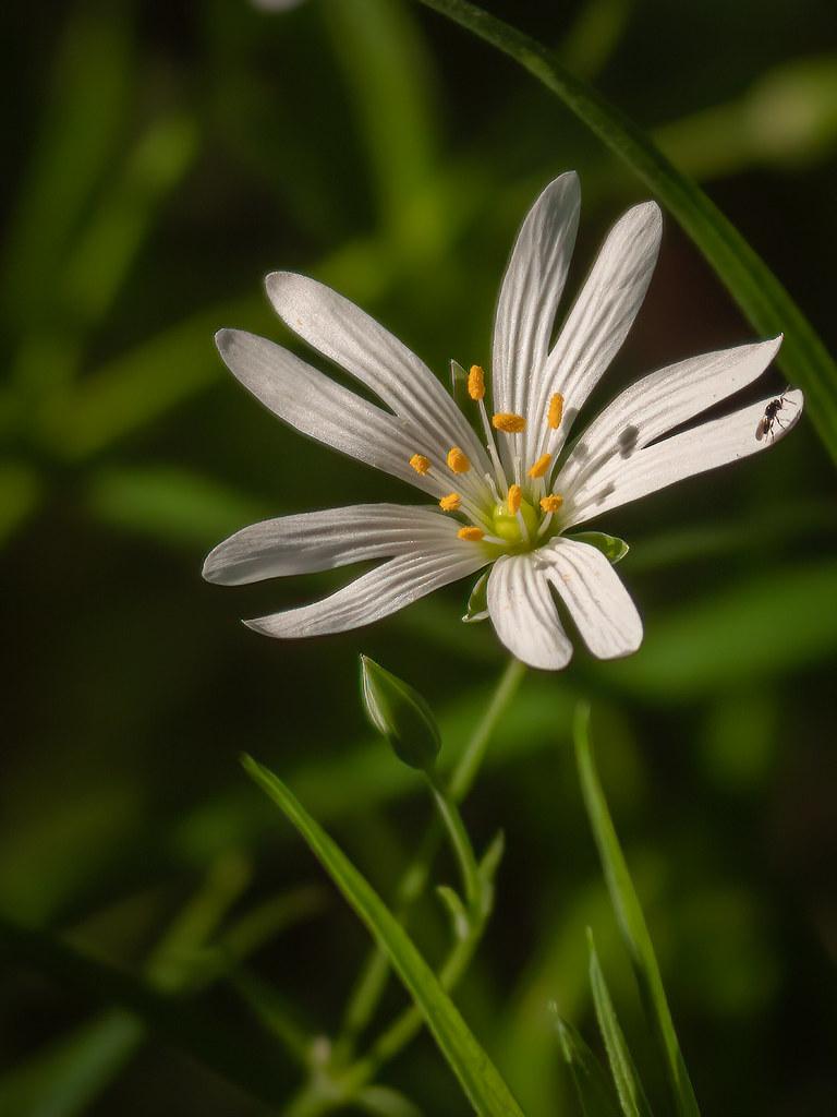 Petite fleur des sous-bois... 49789420792_d11c5d0e4b_b