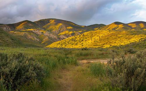 carrizoplainnationalmonument california superbloom flowerbeds sanluisobispocounty sodalake grassland sanandreasfault poppies lupine monolopia winterrains