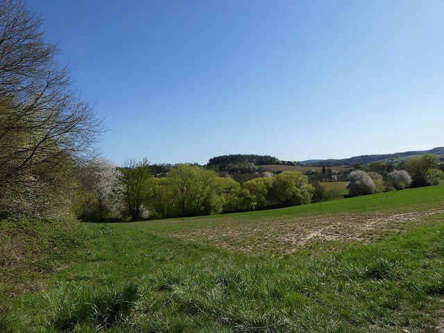 Spaziergang übers Feld